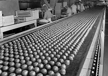 Candy Conveyor